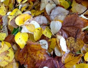 Autumn in Dunedin